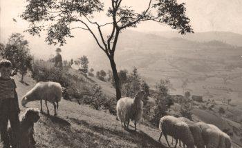 Pecore Pecorelle